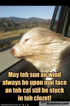 funny dog pictures - Wishful Thinking (Funny Animals) - http://relolver.com/funny-dog-pictures-wishful-thinking/