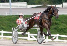 Lilu Hanover, harness racing