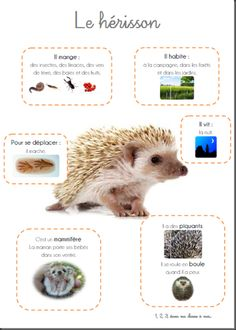 Poster le hérisson Plus animals silly animals animal mashups animal printables majestic animals animals and pets funny hilarious animal Forest Animals, Zoo Animals, Animals And Pets, Animal Mashups, Fun Facts About Animals, Majestic Animals, Teaching French, French Teacher, Animal Projects