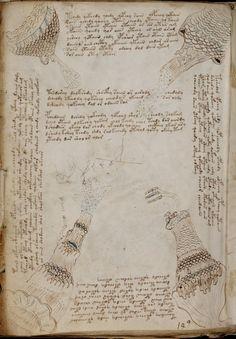 Voynich manuscript baths