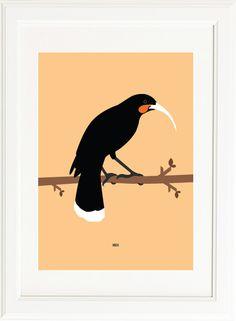 Huia bird