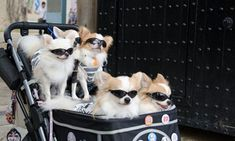 """In Japan designer labels such as Chanel, Dior, Hermès and Gucci offer luxury dog products."" [Guardian article]"