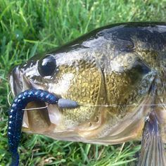 No matter where you are, you can catch 'em! Check out these fall fishing tips for largemouth bass by region at Bass Fishing Tips, Best Fishing, Kayak Fishing, Fishing Hole, Fishing Basics, Fishing Photos, Fishing Stuff, Ice Fishing, Fishing Boats