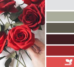 Color palette { paper roses } image via: Colour Pallette, Color Palate, Colour Schemes, Color Patterns, Color Combinations, Color Harmony, Design Seeds, Color Swatches, Color Theory