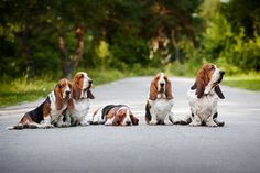 wallpapers basset - Buscar con Google