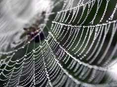 And I was pleased with some of my spider web photographs.  These are AWESOME!