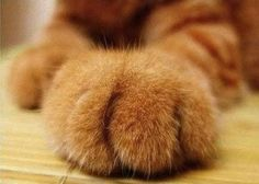 Fear the fluffy kitteh paw.  Treats.  Now.