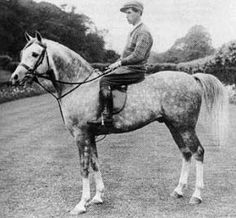 Naseem (GB) 1922 Grey Crabbet stallion. Skowronek {Ibrahim (OA) x Jaskolka by Rymnik} x Nasra {Daoud x Nefisa by Hadban (OA)} Bred by Lady Wentworth, Crabbet Park, GB. Exported to Tersk State Stud, USSR 1936. Having lived through both the exportation to the East and the hardships of WWII, which included an evacuation of the Tersk Stud to Kazakhstan, NASEEM lived in excellent health until 1953, siring foals each year, until he finally found rest at the grand old age of 31