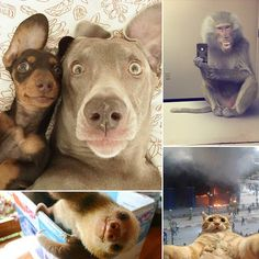 21 Animal Selfies That Are Shutting It Down