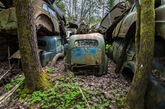 """The cars are now a part of nature in a way. The trees grow all over and through the cars, with branches sneaking through windows and over t..."