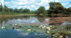 lonjsko polje- fields on sava river