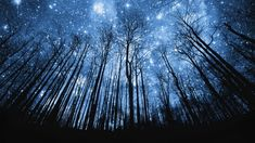 Tree silhouette against starry night sky – Photo of the nocturnal splendor of trees under a starry sky. Starry Night Sky, Night Skies, Starry Eyed, Night Light, Starry Night Wallpaper, Photo Bleu, Ciel Nocturne, Foto Transfer, Forest Wallpaper