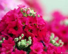 Samuel David Lehrer-Beautiful Flower Garden