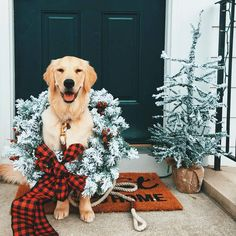 Looking for for inspiration for christmas wallpaper?Browse around this site for cool Xmas inspiration.May the season bring you peace. Christmas Mood, Noel Christmas, Christmas Animals, Dog Christmas Pictures, Christmas Ideas, Snowy Pictures, Dog Pictures, Christmas Snacks, Christmas Cupcakes