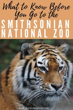 A visit to the Smithsonian National Zoo in Washington, DC can be a blast for both kids and adults alike. To make the most of your visit to the National Zoo, learn what you need to know before you go. Then, have a roaring good time!