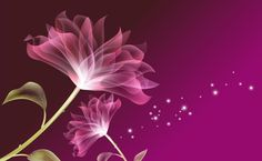Purple translucent flowers HD Wallpaper