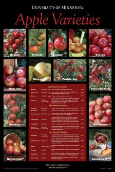 Variety of Apples: http://www.extension.umn.edu/distribution/horticulture/images/8492cover.jpg