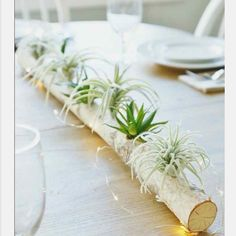 Amazing Air Plant Display Ideas to Add Uniqueness to Your Home. Are you planning to create a unique living decor to decorate rooms in your house? Mini Terrarium, Garden Terrarium, Log Centerpieces, Succulent Centerpieces, Table Decorations, Balcony Decoration, Centrepieces, House Plant Care, House Plants