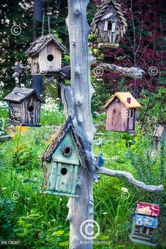 View top-quality stock photos of Variety Of Birdhouses Hanging On Tree In Garden. Find premium, high-resolution stock photography at Getty Images. Tree Stump, Garden Trees, Still Image, Bird Houses, Sweet Home, Layout, Stock Photos, Outdoor Decor, Google Search