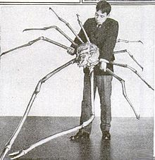 Spider crab with over 12 ft long leg span!