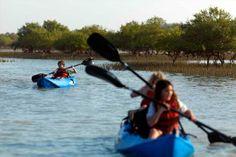 #Kayaking tours take you through natural mangrove forests #AbuDhabi #UAE