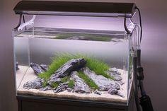 Modern clean aquascape
