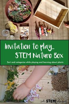 STEM Nature Box: Sort, Categorize, And Learn – a stemful mind Math Activities For Kids, Nature Activities, Montessori Activities, Preschool Class, Elementary Science, Educational Activities, Outdoor Activities, Stem Learning, Outdoor Learning