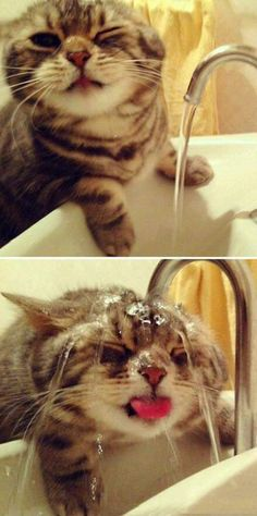 I think that this may be just the most adorable picture, like ever!!!! How often do you see a cat/kitten voluntarily put themselves in water?!?! . Absolutely love it!!!! ❤️❤️❤️❤️