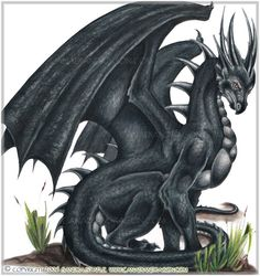 Google Image Result for http://darkjade68.files.wordpress.com/2012/04/blackdragon.jpg
