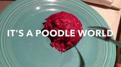 Poodle Cult Eats From Fork!