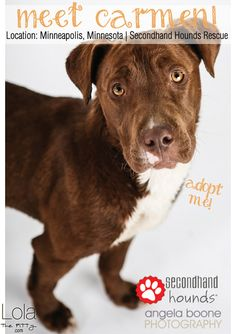 Meet Carmen! Adoptable Dog of the Week from Minneapolis! - lolathepitty.com -