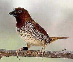 Resultado de imagem para aves exoticas
