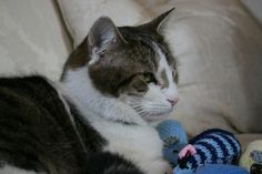 Larry with a knitted mice