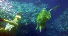 Molokai Snorkeling tours