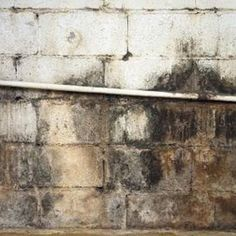 Lovely How to Clean Mold From Basement Block Walls