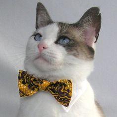 boowtiecat
