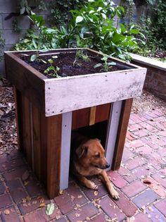 the dog house and garden you want! Lol Dog house with a rooftop garden Backyard Garden Landscape, Modern Backyard, Garden Landscaping, Diy Jardin, Outdoor Dog, Outdoor Living, Cool Ideas, Dog Houses, House Dog