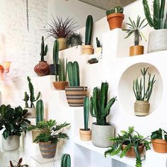 50 DAZZLING YET BEAUTIFUL CACTUS POTS – Page 7 of 50 House decoration; Garden decoration, home improvement, cactus aesthetics Cacti And Succulents, Planting Succulents, Potted Plants, Indoor Plants, Planting Flowers, Cacti Garden, Indoor Gardening, Air Plants, Organic Gardening