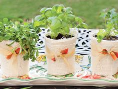 mini herb gardens- great as a hostess gift or party favors