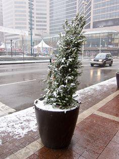 Cincinnati- Fountian Square
