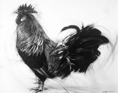 Coq - Hawaii Feral Rooster : APRIL COPPINI