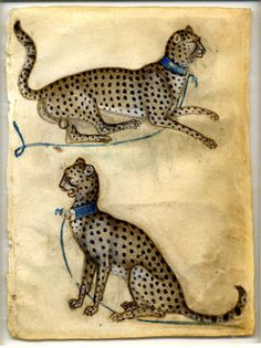 Renaissance Drawings: Italian Renaissance Drawings Two cheetahs (1400-10) by an anonymous artist in Lombardy, Italy. Drawings of animals would be collected together in a book and used as models for embellishing paintings and manuscripts The British Museum