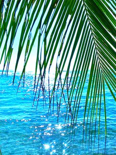 Tropical scene with a palm frond and a sparkling blue ocean. Paradis Tropical, I Love The Beach, Tropical Paradise, Ocean Beach, Beach Fun, Belle Photo, Beautiful Beaches, Beautiful Beautiful, Palm Trees