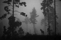 Kesä täynnä luontokuvia – Lue vinkit valokuvien pariin | Suomen Luonto > Myyttinen matka -näyttelyssä jäljitellään jääkauden aikaisen metsästäjän tunnelmia. Kuva Heikki Willamo.anim