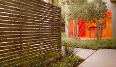 Palo Alto Gold Leed Office  - multi trunk tree w/ mass understory