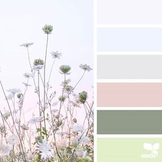 today's inspiration image for { color field } is by @lisaridgelyphotography ... thank you, Lisa, for another incredible #SeedsColor image share!