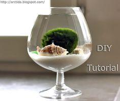 DIY tutorial Marimo moss ball mini aquarium with sea treasures by Arctida, via Flickr