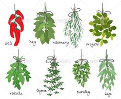 Bunches of Medicinal Aromatic Herb