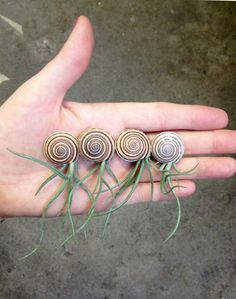 Items similar to BABY jellyfish friend // // air plant tillandsia // by robincharlotte on Etsy