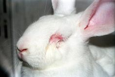 Please tell Victoria's Secret that cruelty isn't sexy and that you won't buy its products until the company is 100 percent cruelty-free again.